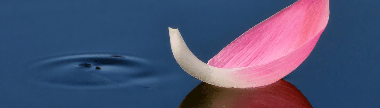 Yogasara banner slider image 4
