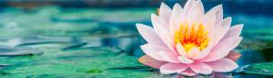 Yogasara banner slider image 3