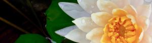 Yogasara banner slider image 1
